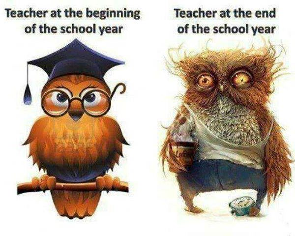 Beginning--end of year owl