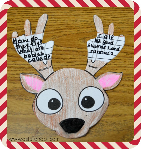 Reindeer question and answer