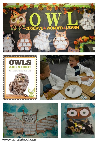 Owl Informational Unit
