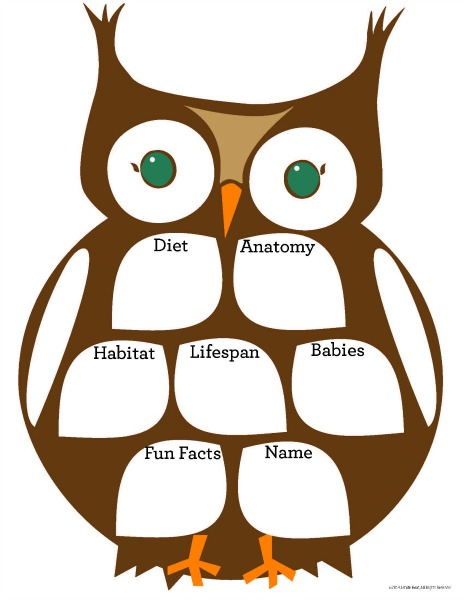 Owl graphic organizer
