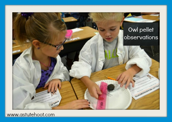 Owl pellet observations