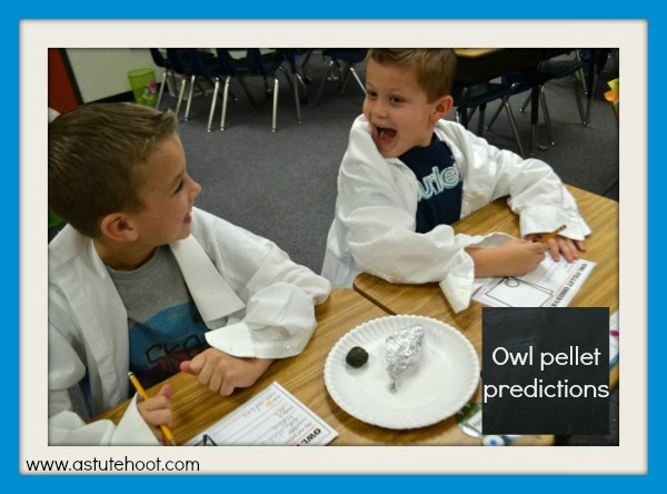 Owl pellet predictions