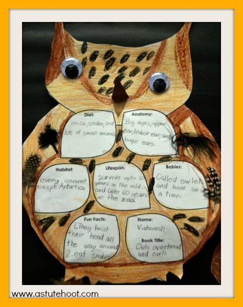 Owl report 3